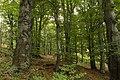 Nature reserve Vlčí důl in autumn 2014 (2).JPG