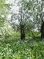 Naturschutzgebiet Heuckenlock 21.05.2014 Phase 20.JPG