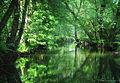 Naturschutzgebiet Weschnitzaue von Mörlenbach und Rimbach - Weschnitz bei Mörlenbach.jpg