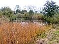 Natuurgebied De Twigen 04.JPG
