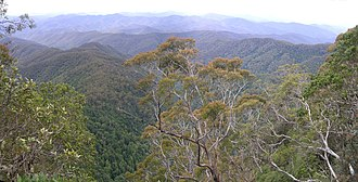 Eastern Australian temperate forests - New England National Park, New South Wales