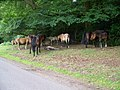 New Forest Ponies, Furzley Common - geograph.org.uk - 1422774.jpg
