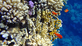 http://upload.wikimedia.org/wikipedia/commons/thumb/9/9d/Nice_corals_at_Sharm_El_Naga_beach.jpg/320px-Nice_corals_at_Sharm_El_Naga_beach.jpg