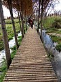 Nice walking path in Yunnan.jpg