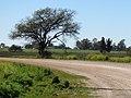 Nogoyá, Entre Ríos, Argentina - panoramio (134).jpg