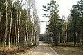 Notec Forest, Mialy, Debogora 03.JPG