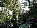 O seră a grădinii botanice Cluj.jpg