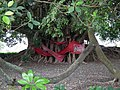 Old Banyan Tree 老榕樹 - panoramio.jpg