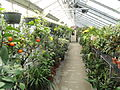 Orangerie - Lyman Plant House, Smith College - DSC04359.JPG