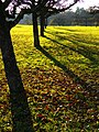 Orchard In November Sunlight - panoramio.jpg