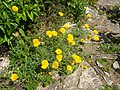 Orléans - jardin des plantes (17).jpg