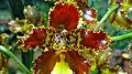 Orquidea Parque Nacional Carrasco.jpg