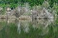 Ossiach Alt-Ossiach Bleistätter Moor Bäume und Büsche 23052019 7069.jpg
