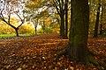 Otley Chevin Forest Park (50691908).jpeg