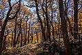 Otoño en el Parque Nacional Patagonia.jpg