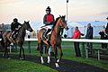 Overturn Race Horse.jpg