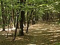 Přírodní park Škvorecká obora-Králičina - lesy východně od sídliště Rohožník a severně od Květnické studánky (5).JPG