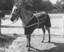 Sergeant Reckless - Wikipedia