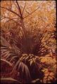 PLANT LIFE IN CITY PARK - NARA - 546014.tif