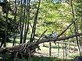 Parc animalier Aran Park de Bossòst 03.jpg