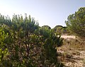 Parque de Doñana 20210610 19.jpg