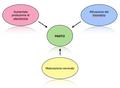 Parto - Eventi biomolecolari.png