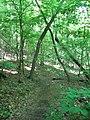 Path Company Mill Trail Umstead NC SP 0033 (3583725512).jpg