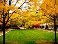 Penn campus 4.jpg