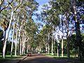 Perth (2052456780).jpg