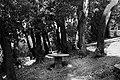 Pescia, villa la guardatoia, bosco all'inglese 03.jpg