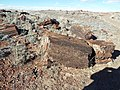 Petrified Forest National Park-4.jpg