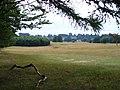Petworth Park, Halfmoon Furze - geograph.org.uk - 231144.jpg