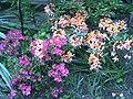 PflanzenMai06-003.JPG