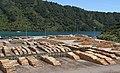 Picton Logs (31768455755).jpg