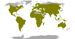 Distribuição geográfica da família Columbidae.