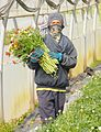 PikiWiki Israel 29423 Agriculture in Israel.JPG