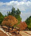 PikiWiki Israel 30349 Geography of Israel.jpg