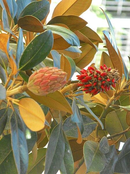 צמחייה בצבעי שלכת