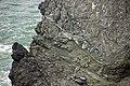 Pillow basalts (Franciscan Complex, Jurassic; Point Bonita, California, USA) 37 (46348508935).jpg