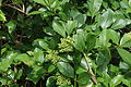 Plant 09912.JPG