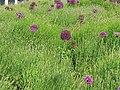 Plant bed, Heelis, Swindon - geograph.org.uk - 820363.jpg