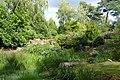 Plantes aquatiques-Jardins de Callunes (5).jpg