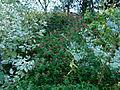 Plantes automne Jardin des Plantes 5.JPG