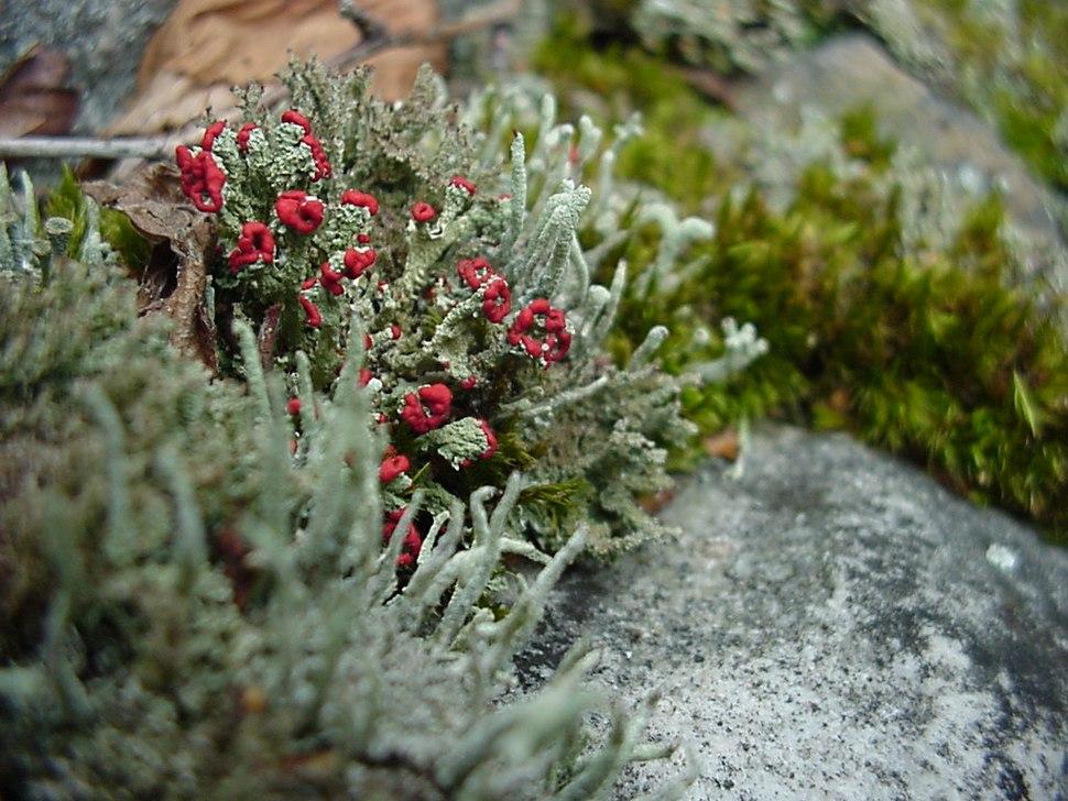 Plants flowers ice rocks lichens 209