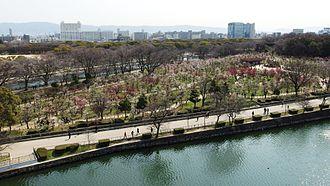 Osaka Castle Park - Plum garden