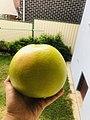 Pomello fruit.jpg