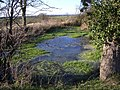 Pond adjacent to Three Shire Bridleway - geograph.org.uk - 300127.jpg