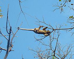 Un autre, au Nicaragua