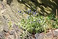 Průhonický park - alpinum u zámku 26.jpg