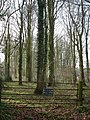 Private Woods by Hill Farm - geograph.org.uk - 301532.jpg